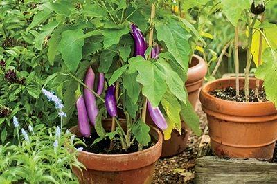 terrace-vegetable-garden-2_mini