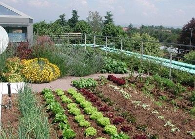 Terrace Vegetable Garden 6 Mini