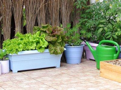 terrace-vegetable-garden-8_mini