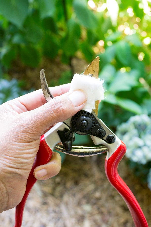 Cleaning-Pruners-for-plant-propagation