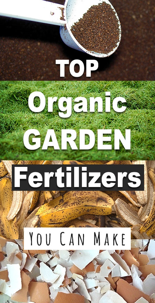 Top-Organic-Fertilizers-You-Can-Make-2.jpg